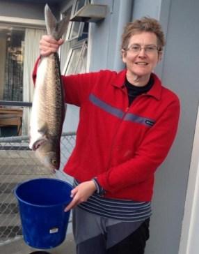 Biggest fish so far, Ligs at Waitarere Beach.