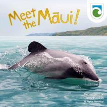 meet-the-maui