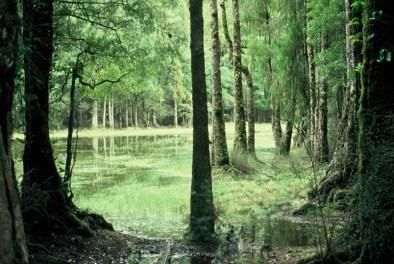 Waihora Lagoon, Pureora Forest Park. Photo: Les Molloy.