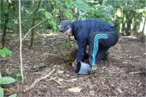 Tasman Toyota CEO James Crighton planting the rimu tree.