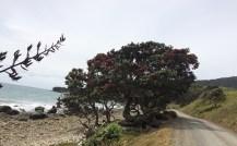 Fletcher Bay campsite.