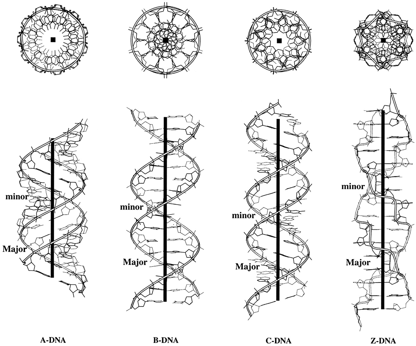 3dna Homepage Nucleic Acid Structures