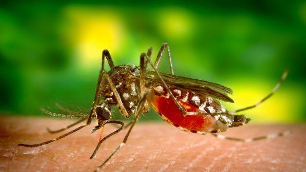 La vacuna contra el dengue TAK-003 es probada en niños y adolescentes (Foto: Pixabay)