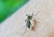 ¿Cuál es la eficacia de la vacuna contra el dengue? (Foto: Pixabay)