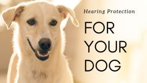Dog Hearing Protection Options & Reviews