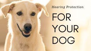 Dog Hearing Protection Options & Reviews