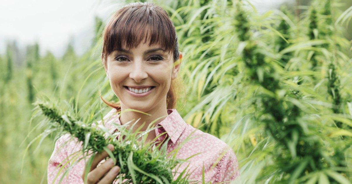 CBD : Comprendre pourquoi la France va officiellement légaliser la vente de cannabis light !