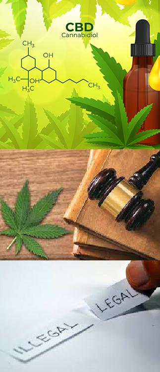 Réglementation du CBD en France. Cannabis Légal et CBD