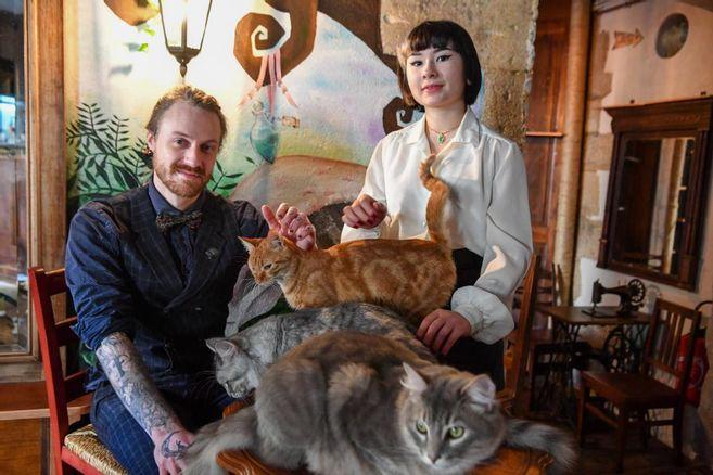 Tour de ville – « Once upon a cat », un bar où les chats sont rois à Limoges