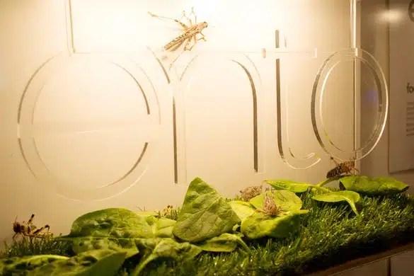 ento, les sushis a base d'insectes