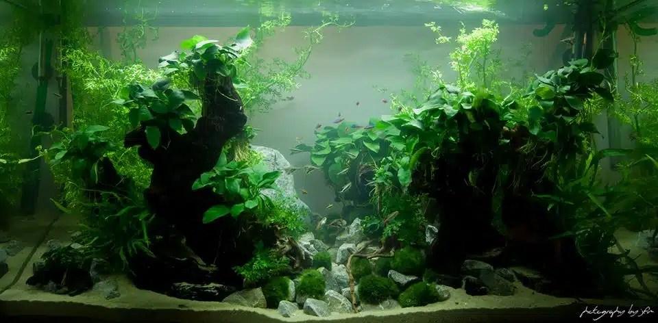 les bienfaits des Aquariums- 10ème Championnat d'Aquariophilie France 2013