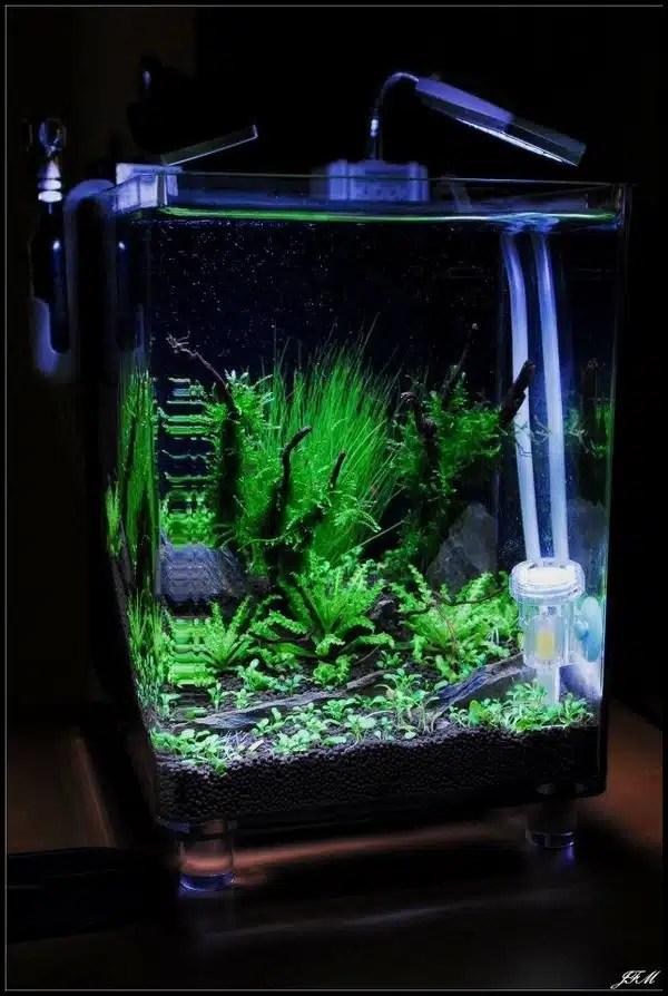 aquarium cryptal aquariophilie