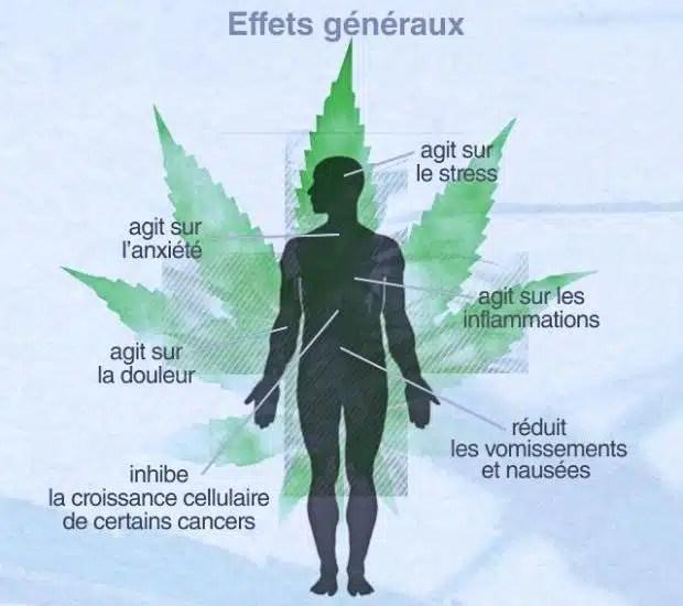 bienfaits therapeutiques cannabis sante