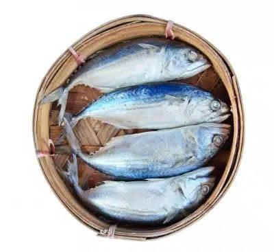 maquereaux poisson