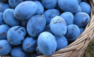 bienfaits prunes sante