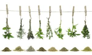 herbes aromatiques assaisonnement cuisine