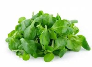 mache en salade