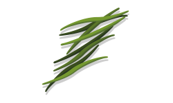 haricots verts saison