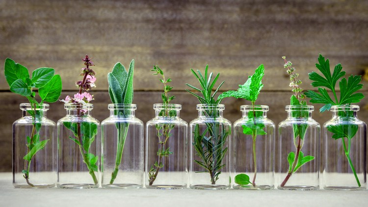 Consultations 101: Clinical Aromatherapy – Using Essential Oils in Your Clinical Practice