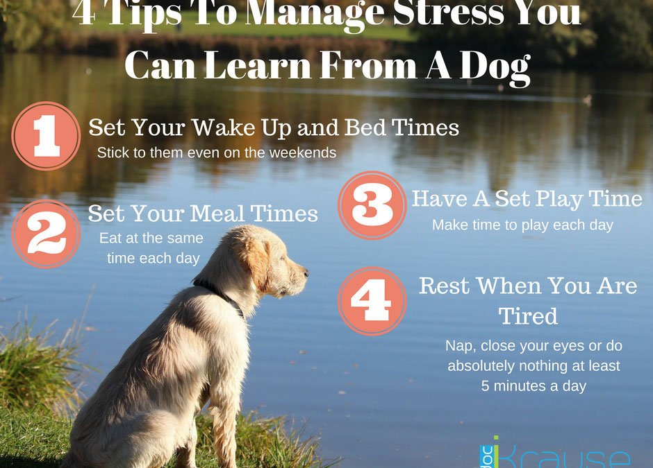 4 Tips To Manage Stress You Can Learn From A Dog