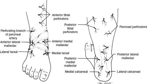 Anterior Medial Malleolar Artery