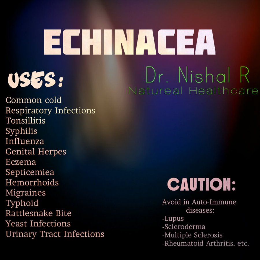 Drug of the day - Echinacea