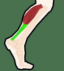 triceps-4008180_1920