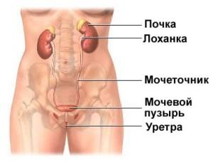Bakteriális prosztatagyulladás meddig tart a kezelés