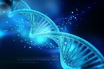 Source:  http://io9.gizmodo.com/over-90-of-human-dna-may-be-completely-worthless-1610783472