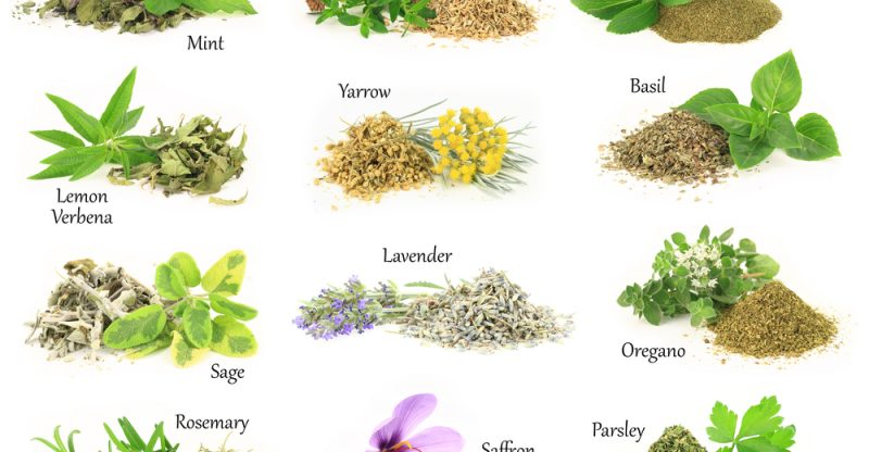 List of 10 Herbs With Their Benefits and Uses