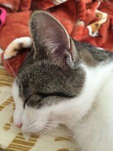Cady Asleep