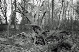 Forest art - Waldkunst I_3