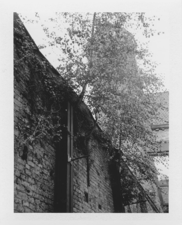 tree growing on the wall
