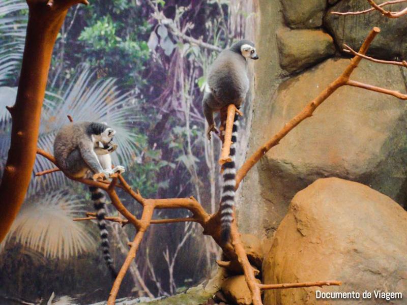 O Rei Leão e Madagascar