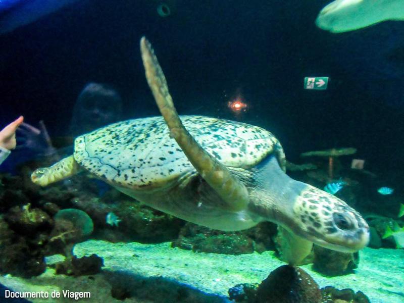 Tartaruga marinha verde