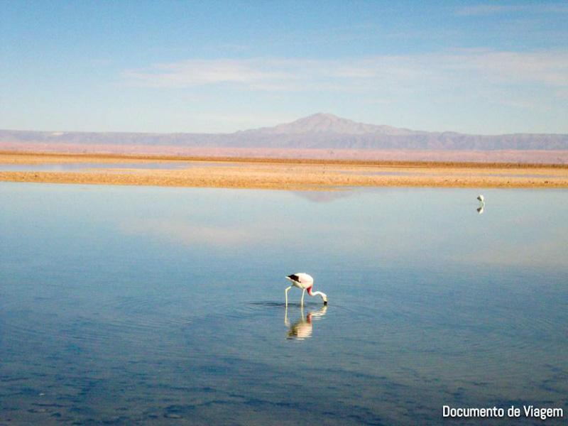 Salar de Atacama Los Flamingos