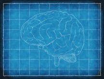 brain-1845941_1920
