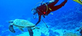blue-deep-diving-sri-lanka-9