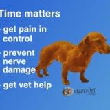 Emergency Nerve Damage Info
