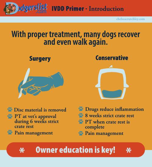 IVDD disc disease treatments
