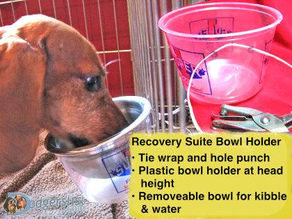 bowl-holder-DIY.jpg?fit=420%2C315&ssl=1