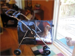 Pet Stroller during a disc episode