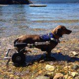 Wheelchairs when? features? – Shortcut Thru IVDD
