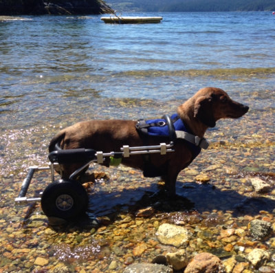 Wheelchair-Rudy.jpg?fit=400%2C397&ssl=1
