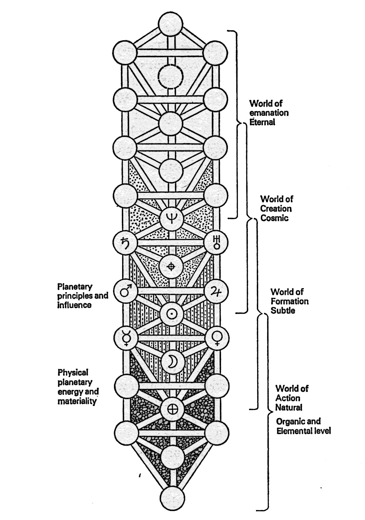 The Horizon Of Eternity A Diagram Of The Tree Of Life