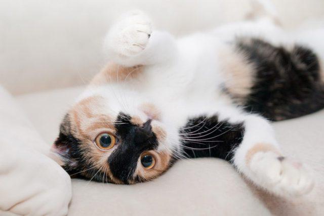 essentiele olie kat ontspannen