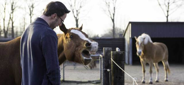 paardencoaching coach paard