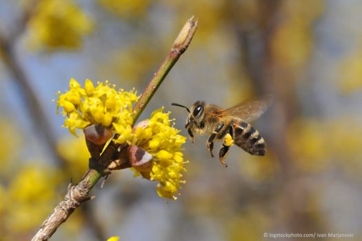 Bee Working
