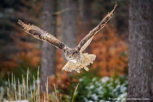 Wing Challenge to Origin of Life