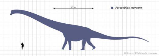 Largest Land Animal